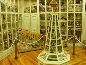 Sala_ornitologica_Museo_Civico_Craveri_Bra