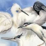 """Bra: dialogo tra forma e natura in mostra al museo """"Craveri"""""""